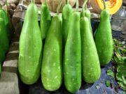 bottle gourd | all vegetable's name