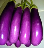 brijal | all vegetable's name