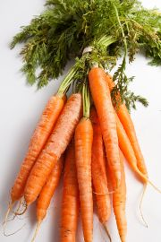 carrot | all vegetable's name