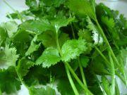 Coriander Leaf | all vegetable's name