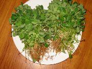 Fenugreek leaf | Vegetable name in English-Hindi