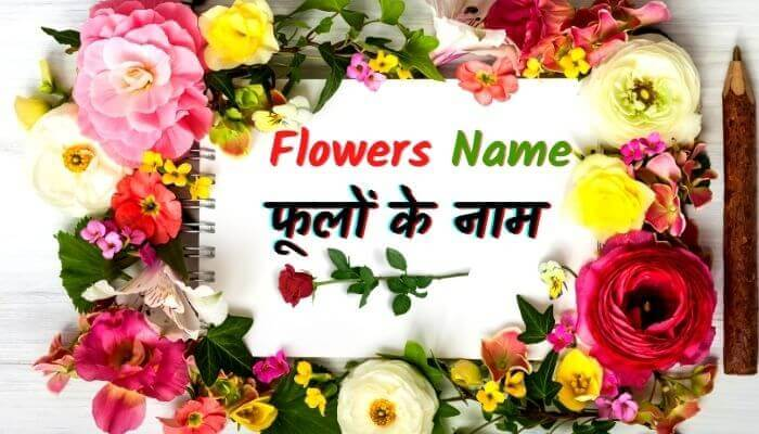 flowers name in hindi english