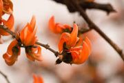 palash | flower's name in hindi
