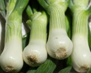 Spring Onion | Vegetable name in English-Hindi