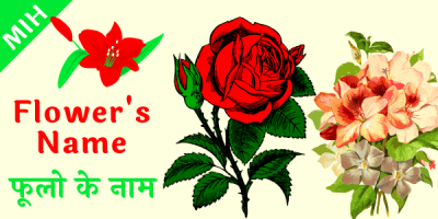 flower name in hindi and english