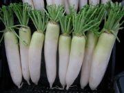 radish | Vegetable name in English-Hindi
