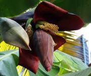 raw banana flower | vegetable name