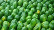 raw papaya | vegetable name