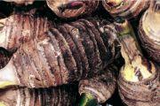 taro root | vegetable name
