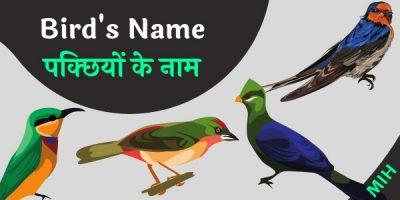 Birds name in english and hindi