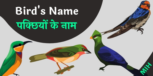 Birds name in english and hindi