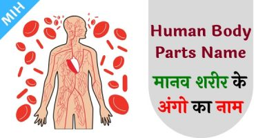 body parts name in english and hindi