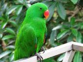 parrot | bird name