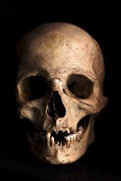 human body skull