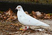 dove a bird animal