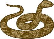 snake wild animal