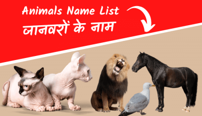 animals name in hindi english