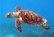Sea turtle animal in sea
