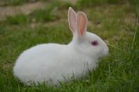 rabbit wild animal