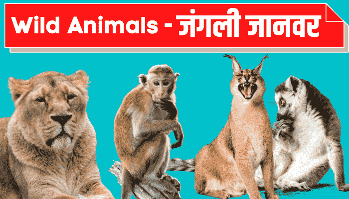 wild animals name in hindi english