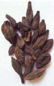 dry myrobalan