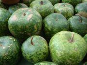 Apple gourd